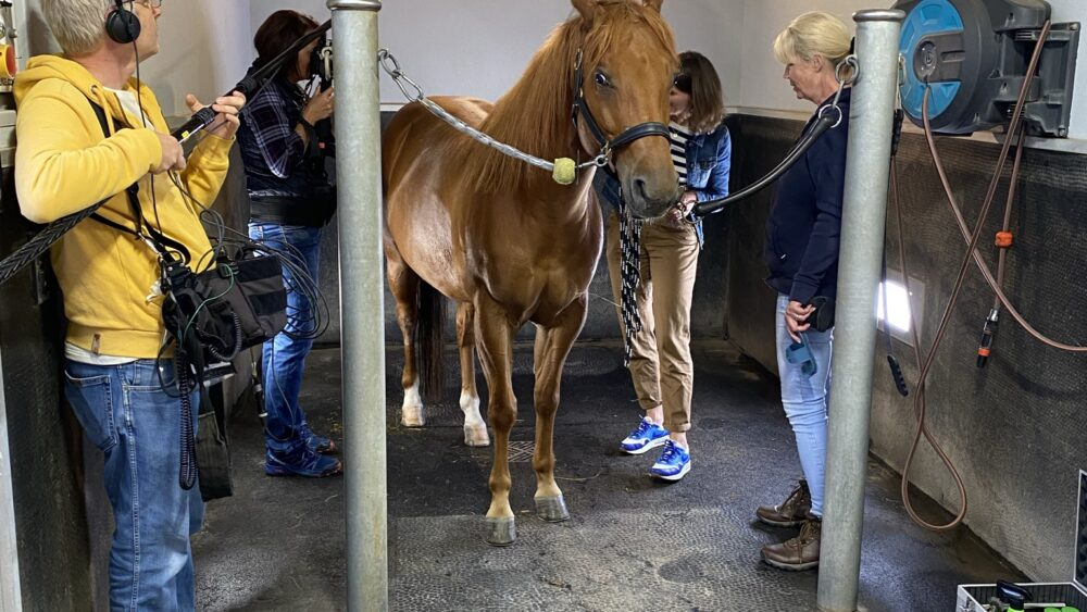 Camera team with presenter, Nele Neuhaus and horse in stable