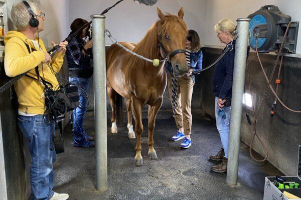 Kamerateam mit Moderatorin, Nele Neuhaus und Pferd im Stall